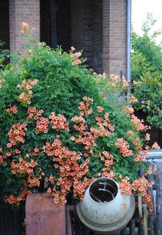 Blomsterbusk og cementblander